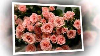 Все цветы для тебя...(Прекрасные цветы на День рождения! Осваиваю слайд-шоу в программе ProShow Producer. Картинки взяты в Интернете,..., 2015-12-11T18:59:09.000Z)
