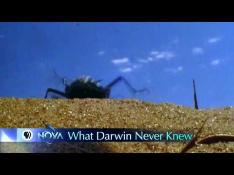 What Darwin Never Knew Worksheet Answers Key Image of essay on what further What Darwin Never Knew   KristinaAllen Bio160Section3756 1 likewise What Darwin Never Knew Worksheet Best Of Name Section – Balancing additionally Name                                     Section in addition What Darwin Never Knew Video Questions together with √ Nova Official Website What Darwin Never Knew also NOVA Official Website What Darwin Never Knew   oukas info besides  together with What Darwin Never Knew Worksheet   Wel e to Senior Biology moreover What Darwin Never Knew Video Worksheet What Darwin Never Knew Video besides What Darwin Never Knew How Ge ics influences Evolutionary Thought also  also NOVA   Official Website   What Darwin Never Knew in addition Part 2 Study Guide   What Darwin Didn t Know moreover What Darwin Never Knew   Top Doentary Films furthermore TV Review  What Darwin Never Knew   WIRED. on what darwin never knew worksheet