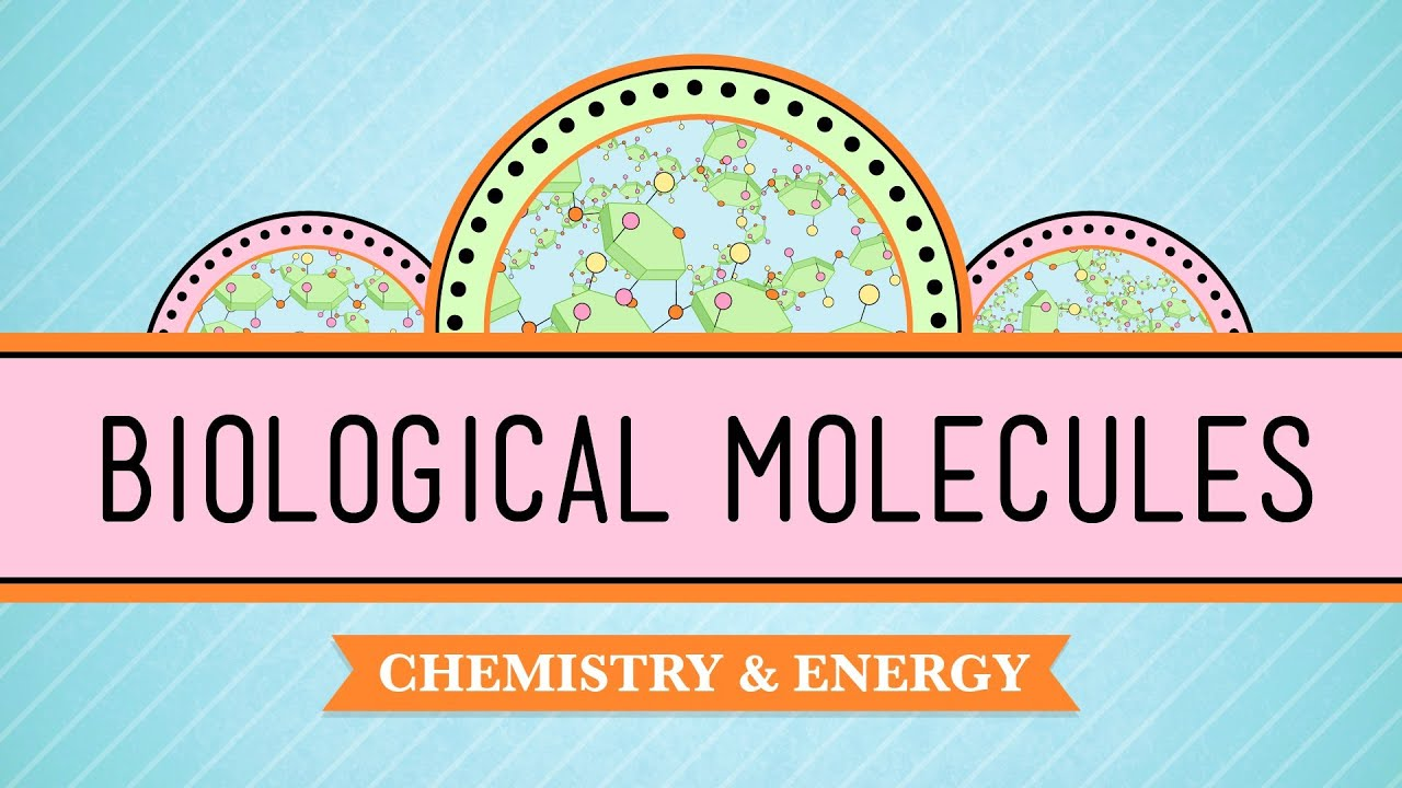 hight resolution of Different Types of Biological Macromolecules   Biology for Majors I