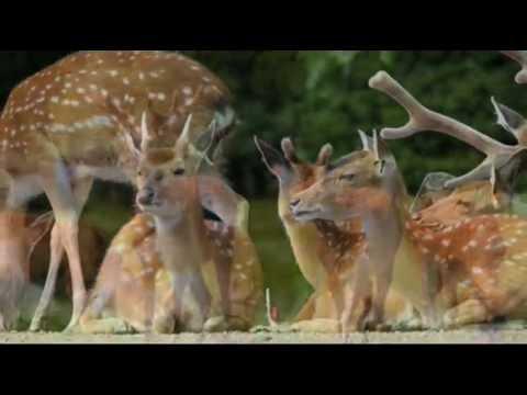 deer wallpaper youtube
