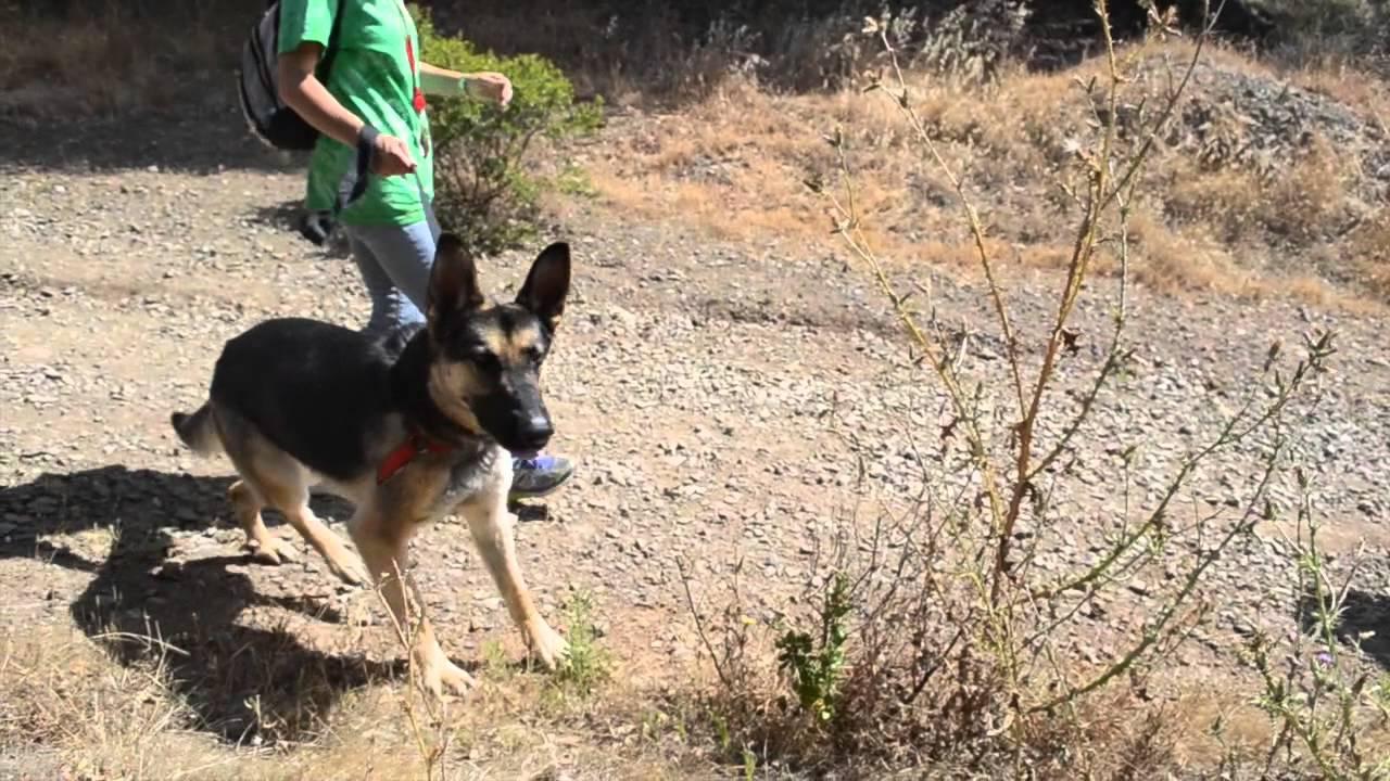 PHS/SPCA Shelter Dog Hike