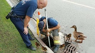 AMAZING MAN RESCUING BABY DUCKS STUCK FROM SEWER | Rescue Animals
