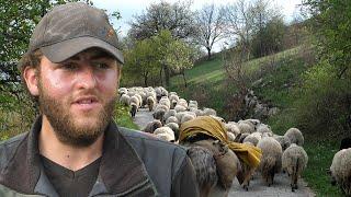 Zbogom ovce ode Hasan u Austriju