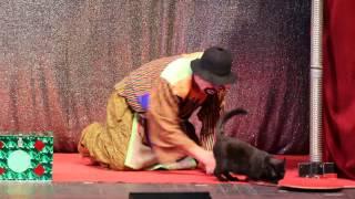 Повелитель кошек и его питомцы выступили в Саратове