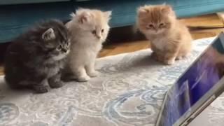 Cute Cats watching Cartoons