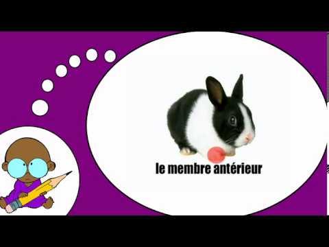 Ik leer Frans = het konijn