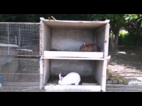 Nettoyage des clapiers lapins youtube - Clapier lapin beton ...