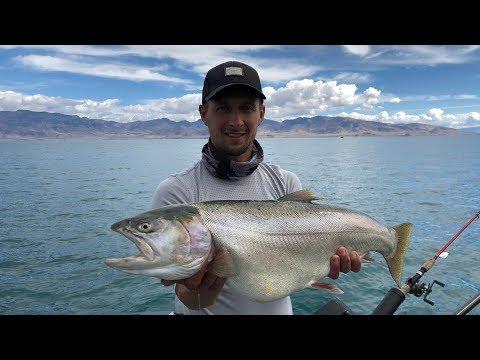 Pyramid Lake NV,  Big Cutthroat Trout Fishing