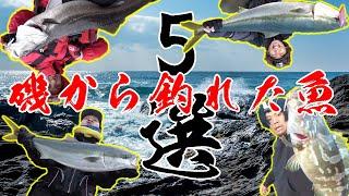 磯から釣れた巨大魚5選!