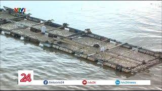 Hàng nghìn tấn cá chết trắng chỉ trong 2 giờ tại Đồng Nai - Tin Tức VTV24