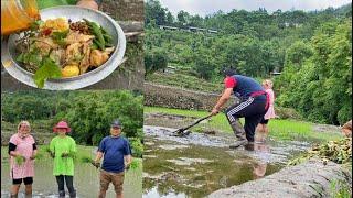 Rice Cultivation Vlog (Ep.02) Transplanting Rice Seedlings  cook &amp vlog