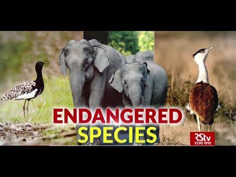 In Depth - Endangered Species
