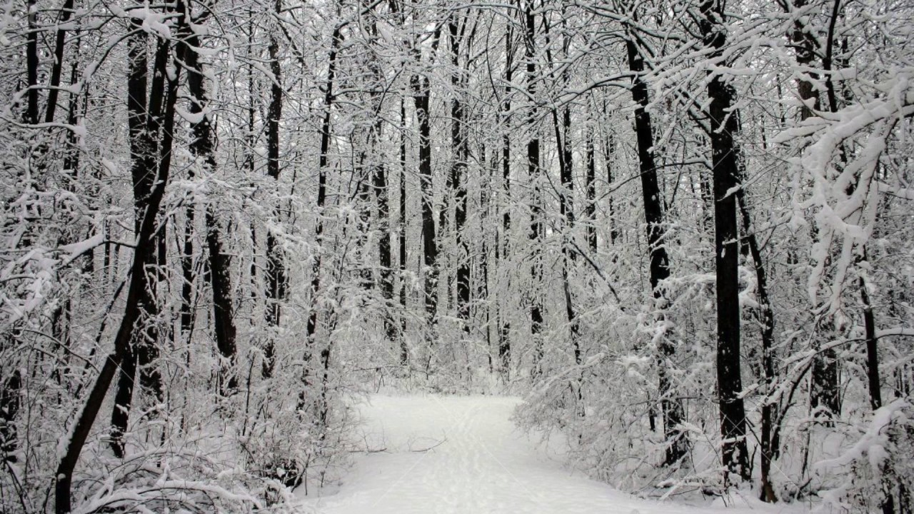 stopping by woods on a snowy evening robert frost poem stopping by woods on a snowy evening robert frost poem