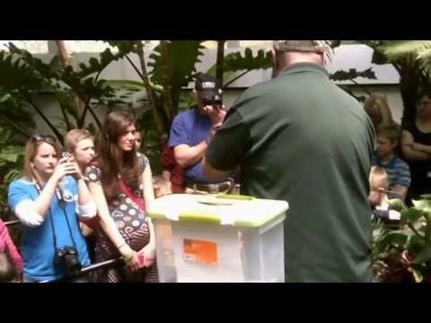 Franklin Park Conservatory - Butterfly Release (04/25/2013)