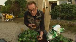 robs grote tuinverbouwing bij kwekerij bert schouten