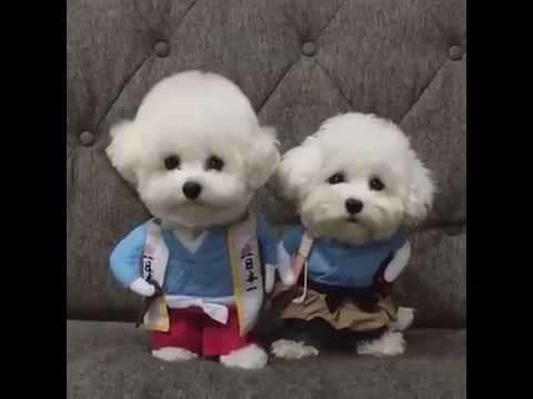Listen to Music by 3 Artist dogs Funny