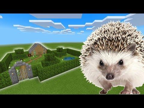Minecraft PE : How To Make a Hedgehog Farm 🦔