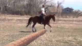 Parelli Game of Contact for Natural Horsemanship and Dressage - Before & After with Amy Bowers