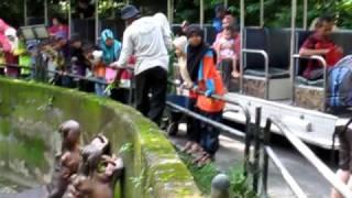 Badak Sumbu  @ Zoo Taiping Perak.MOV