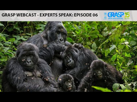 Webcast EP 6 -  Experts Speak on Great apes, Ebola and Vaccinations