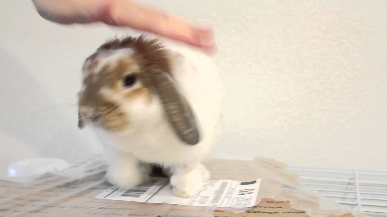 """Purina Cat Chow on Twitter: """"Look guys. Because BUNNY SNEEZE. RT ..."""