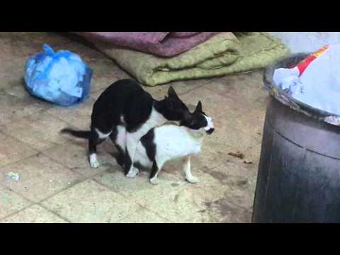 Funny animals sex now pawer of fuck from YouTube · Duration:  14 seconds