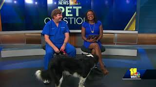 Pet Questions: Is my dog allergic to grass?