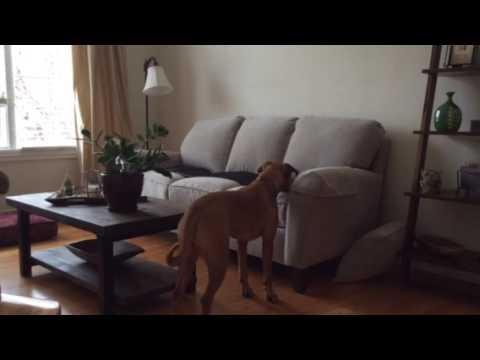 Sofa Scram