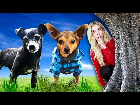 Hide and Seek Challenge with Our Dogs for the First Time! (Best Hiding Spot Wins) PawZam Dogs