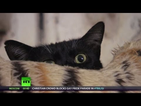 Meow! Secret Hermitage Helpers (RT Documentary)