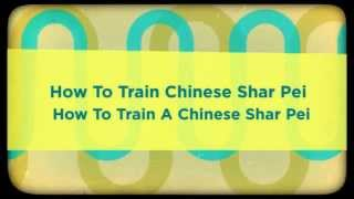 How To Train Chinese Shar Pei