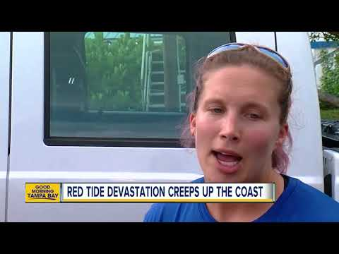 Red Tide now entering Pinellas County