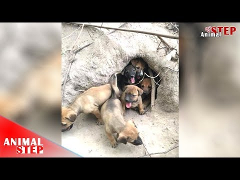 Life in The Cave of Puppies and Their Mothers – Hope They Will Be Safe