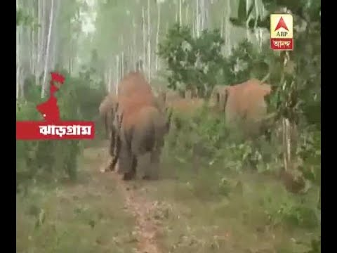 Elephant attack at West Midnapore's...