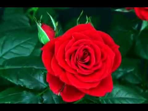 Very Nice Flower