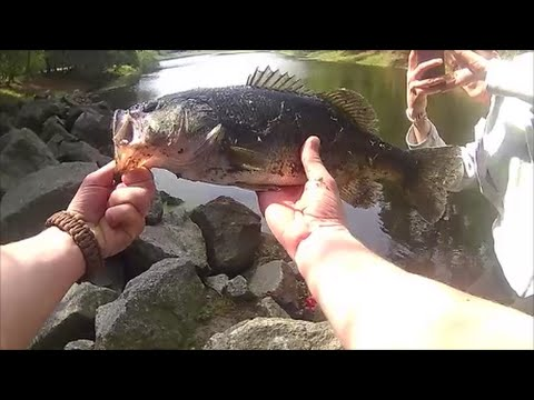 Jarvis Creek Hilton Head Spring Bass Fishing!