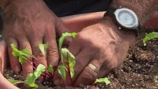 How to Transplant Beets : Raised-Bed Gardens