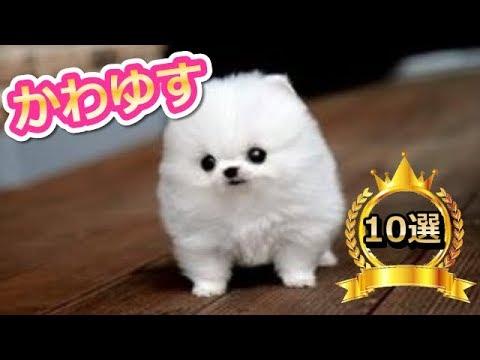 「かわいい犬」動物の中でもダントツ人気ランキングtop10