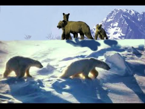 Bears of Alaska[Nature Documentary]HD