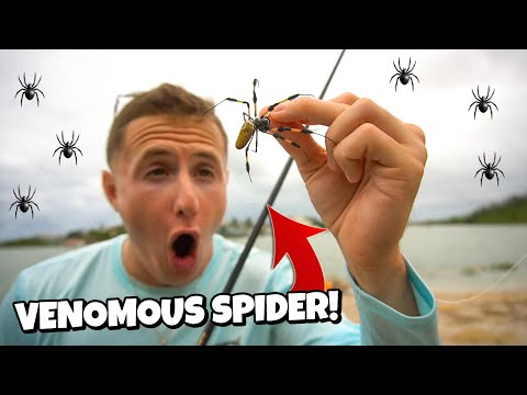 fishing-with-live-spiders-2!!