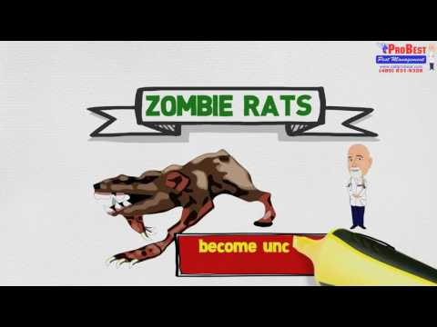 Rat Borne Diseases: Toxoplasmosis -  Rodent Control Services  in Arizona   (480) 831- 9328