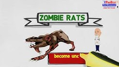 Rat Borne Diseases: Toxoplasmosis -  Rodent Control Services  in Arizona   (480) 831- 9328