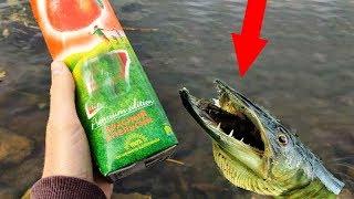 Прикормка из КРАСНОГО АПЕЛЬСИНА Реакция рыбы на сок красный апельсин подводная съемка на рыбалке