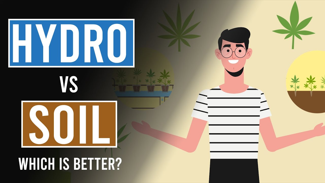Hydroponics Vs Soil: Which is best?