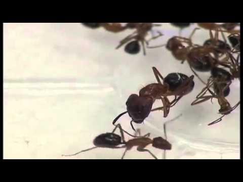 Optigard Ant Gel Demo Doovi