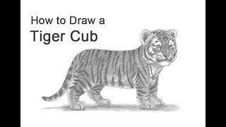 a tiger cub drawing lesson