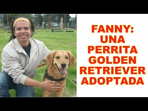 Fanny: Una perrita Golden Retriever adoptada | Tu Mascota TV
