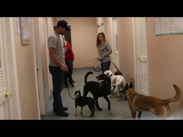 TYD60 Moment- Helping A Dog Work Through Aggression Problems- Dog Training in Utah