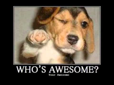 Skillet - Who's Awesome? You're awesome!