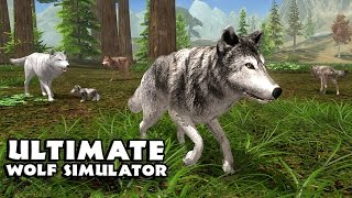 Ultimate Wolf Simulator Android Gameplay [HD]